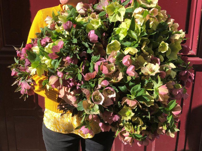 Bouquet de fleurs fraîches brassée d'hellébores